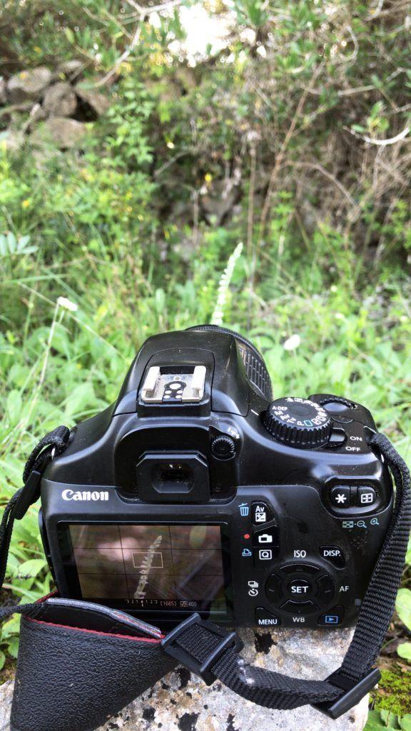 foto orquiruta endemicanatura orquidia silvestra