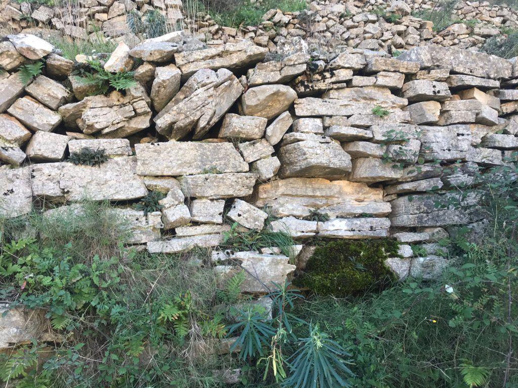 marge pedra en sec etnobotanica endemica natura