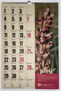 calendari avella pedreguer endemica orquidies silvestres