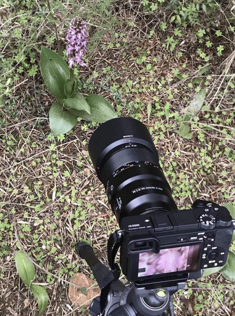 fotografiar orquideas silvestres orquiruta endemica natura